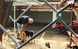 Trạm cứu hộ Soi Dog - mái nhà cho những chú chó được giải cứu