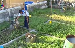 Mô hình rau tiết kiệm nước tại Trường Sa