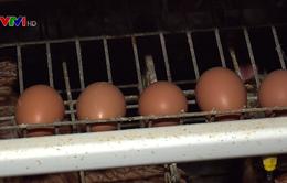 Gần 1.750 điểm bán thịt, trứng gia cầm tham gia truy xuất nguồn gốc