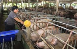 Chính thức cấm và phạt nặng nếu dùng chất tạo nạc Cysteamine trong chăn nuôi