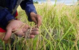 Tình trạng ấm lên trên toàn cầu khiến lương thực giảm dinh dưỡng