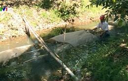 Vĩnh Long dùng túi chứa nước ứng phó hạn mặn