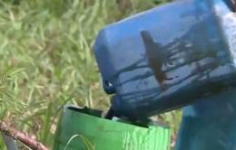 Vĩnh Phúc: Nông dân sử dụng dung dịch lạ tưới cho hoa màu