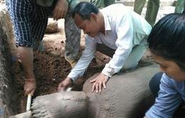 Tìm thấy tượng cổ tại quần thể di tích Angkor