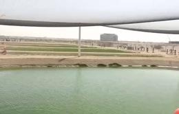Nông nghiệp trên sa mạc tại UAE