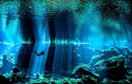 Ngỡ ngàng thế giới dưới nước đầy kỳ ảo qua ống kính máy ảnh