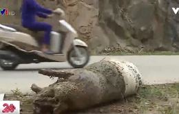 Phú Thọ: Rác thải, xác động vật bủa vây người dân
