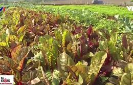 Ứng dụng công nghệ cao vào canh tác rau củ hữu cơ