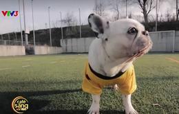 Café Sáng với VTV3: Ngộ nghĩnh trận bóng đá của những chú chó