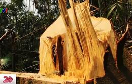 Khai thác gỗ trái phép tại Thanh Hóa: Con voi chui lọt lỗ kim?