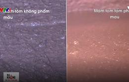 Cách phân biệt mắm tôm sạch và mắm tôm bẩn