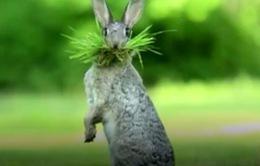 Công bố những bức ảnh động vật hài hước nhất năm 2017