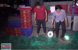 Bắt giữ vụ vận chuyển gần 200kg rắn quý hiếm
