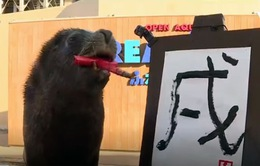 Độc đáo hải cẩu vẽ thư pháp