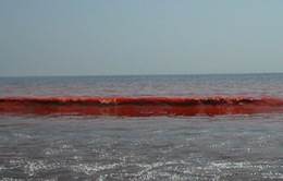 Vệt nước đỏ tại miền Trung là thủy triều đỏ
