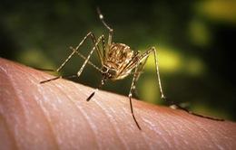 Hàn Quốc cảnh báo về bệnh viêm não Nhật Bản