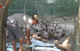 Quảng Ngãi: Tiêu hủy gần 400 con vịt nhiễm cúm A/H5N6