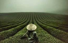 Cảnh đẹp Việt Nam của nhiếp ảnh gia người Mỹ