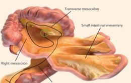 Phát hiện ra cơ quan nội tạng mới