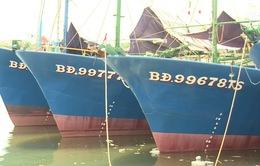 Bồi thường cho ngư dân có tàu vỏ thép bị hư hỏng tại Bình Định: Sẽ thương lượng lần cuối vào ngày 3 - 4/4