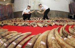 Trung Quốc triệt phá 13 vụ buôn lậu ngà voi trong 6 tháng