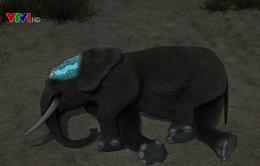Tìm hiểu bí ẩn về giấc ngủ của loài voi