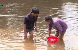 Thanh Hóa: Cá chết hàng loạt trên sông Âm nghi nguồn nước bị ô nhiễm