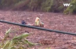 Hà Tĩnh: Người dân liều mạng vớt củi trên hồ thủy điện