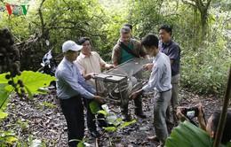 Nghệ An: Trăn đất 10kg quý hiếm có tên trong Sách đỏ được thả vào rừng