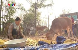 Kon Tum: Nâng cao đời sống bà con vùng biên nhờ cách làm ăn mới