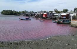 Bà Rịa - Vũng Tàu lo ngại hồ cấp nước sinh hoạt bị ô nhiễm