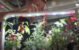 Vườn thông minh tại Estonia - Hướng đi mới trong trồng trọt