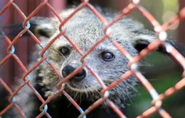 Đề xuất giải tỏa vườn thú tại Công viên 29/3 Đà Nẵng