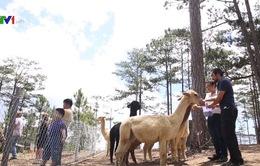 Vườn thú Australia tại Việt Nam