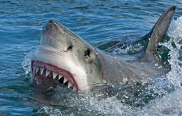 Cố nắm đuôi cá mập, người đàn ông nhận cái kết đắng lòng