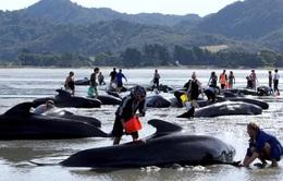 Lo ngại xác cá voi phát nổ, New Zealand đóng cửa bãi biển