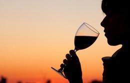 Uống rượu vừa phải cũng gây hại não bộ