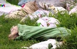 Phạt nặng hành vi vứt xác động vật chết ra môi trường