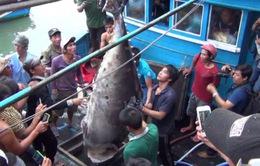 55 triệu đồng cho con cá ngừ vây xanh lớn nhất Việt Nam