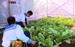 Chiêm ngưỡng những vườn rau xanh mướt ở Trường Sa