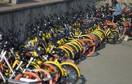 Mobike và Ofo lên kế hoạch sáp nhập dịch vụ xe đạp chia sẻ