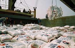 Xuất khẩu gạo giảm hơn 40% về giá trị