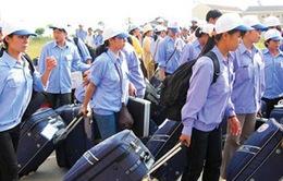 Hàng loạt công ty xuất khẩu lao động bị thanh tra, rút giấy phép