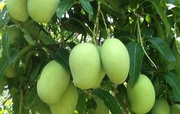 Hoa quả thất thu do mưa trái mùa tại Đồng Nai
