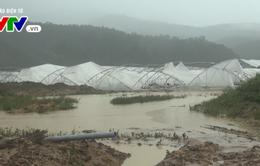 Lâm Đồng: Hàng trăm ha hoa màu bị cuốn trôi do mưa lũ