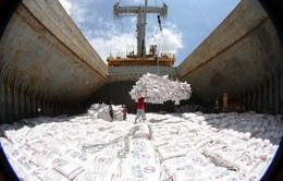 Xuất khẩu gạo tăng vọt giữa khó khăn COVID-19