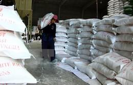 Xuất khẩu gạo nhiều tín hiệu lạc quan sau thời gian dài trầm lắng