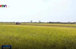 Cần Thơ lần đầu xuất khẩu gạo sang Iran