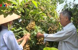 Xúc tiến xuất khẩu nông sản vào thị trường Trung Đông