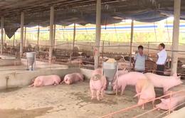 """""""Thịt lợn xuất sang Trung Quốc phải giết mổ và cấp đông"""""""